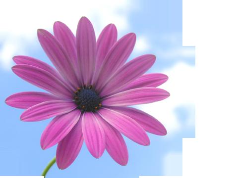 Lila blomma med himmelbakgrund
